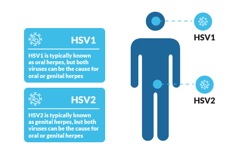 difference between hpv virus and herpes anthelmintic drugs brands