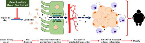dysbiosis and obesity tratamento para oxiurose