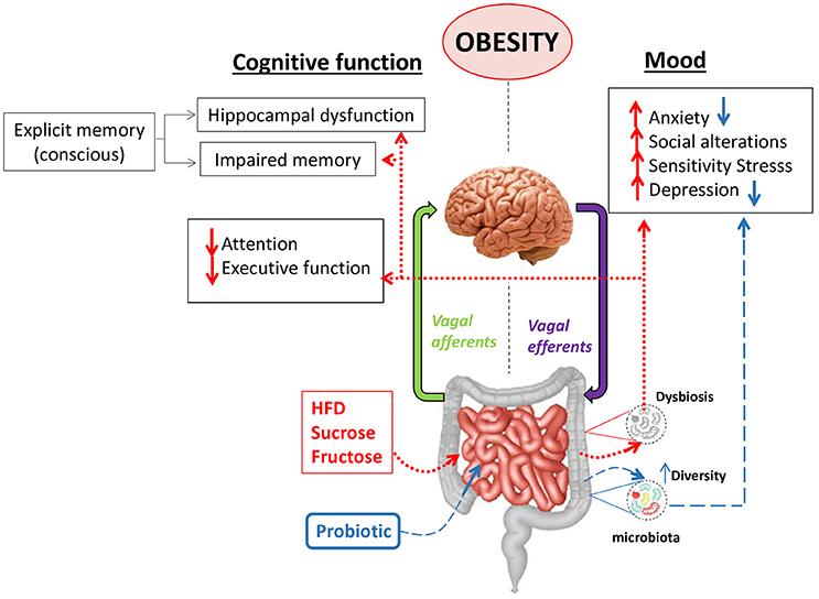 dysbiosis gut-brain axis hepatocellular cancer malignant