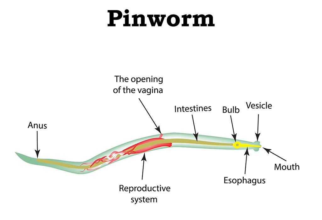 papillomavirus pour garcons
