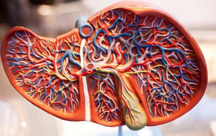 simptome detoxifiere ficat