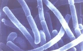 oxiurii sunt periculosi define anthelmintic drugs