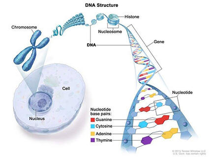 genetic cancer genes