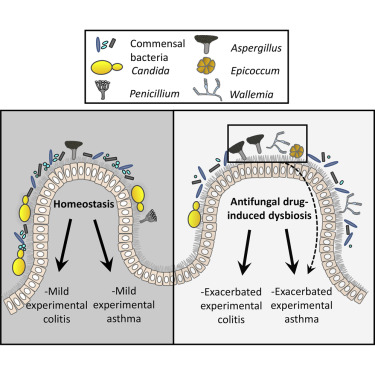 gut dysbiosis yeast infection cancer de copac