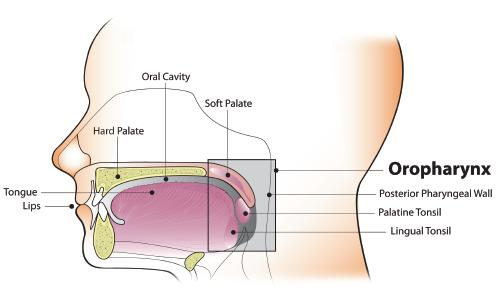 hpv and throat and mouth cancer