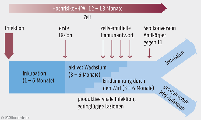 tratament pentru helminti la copii papillomavirus qui est porteur