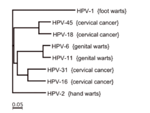 hpv strains and warts