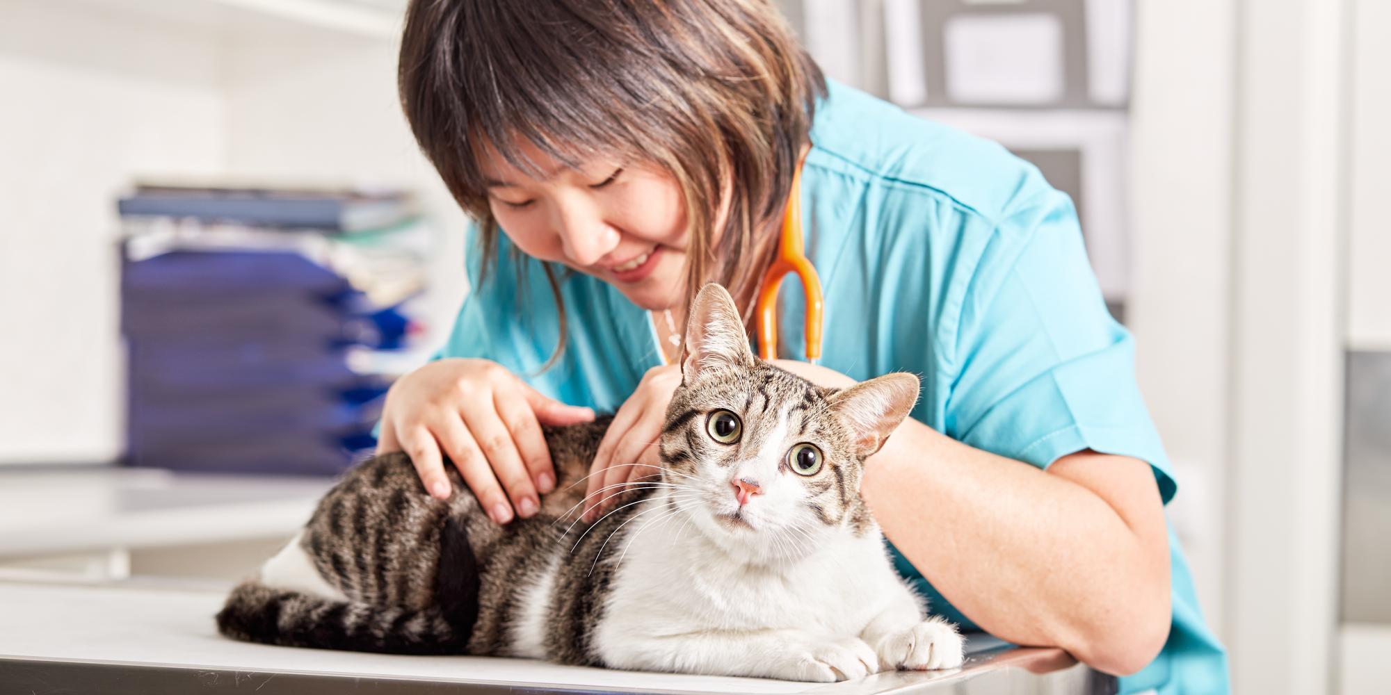 los gatos tienen oxiuros helminth therapy autoimmune