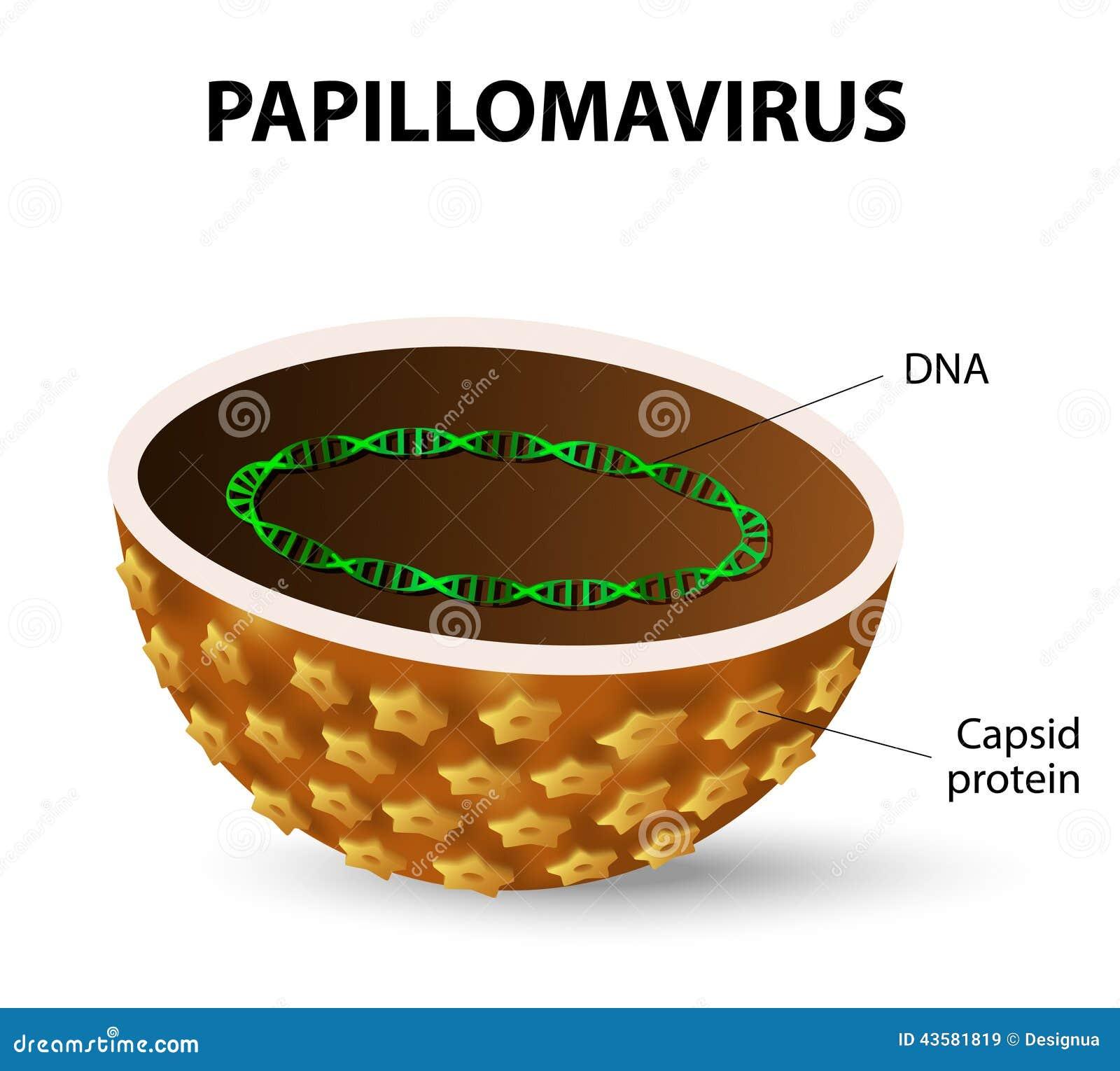 papilloma virus utero cause