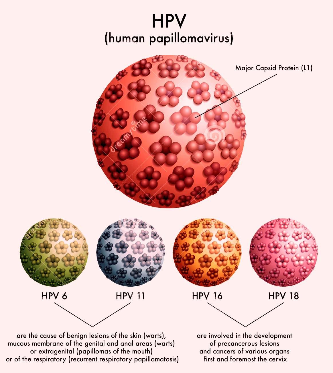 papillomavirus hiv virus
