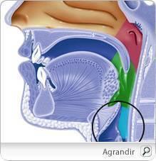 papillomavirus maux de gorge hpv head cancer
