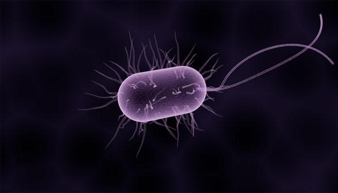 papiloma uzrokuju paraziti u vasem telu