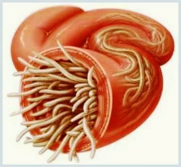 paraziti in sange copii testicular cancer risk factors