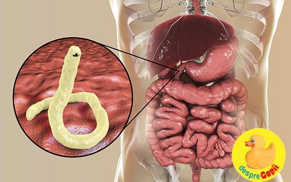 parazitii corpului uman