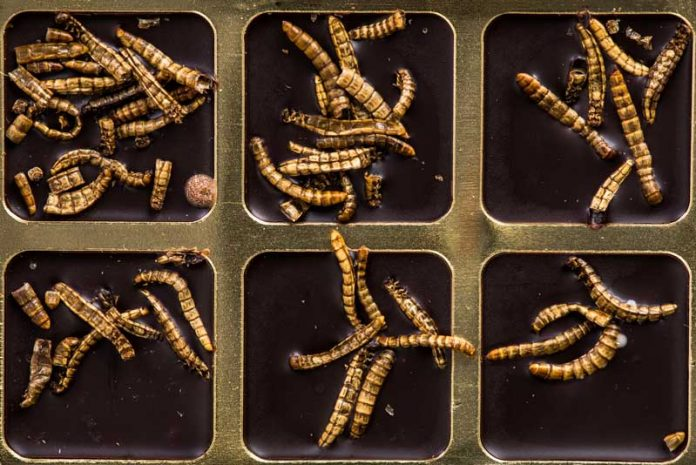 parazitoza simptome verme oxiurus tem cura