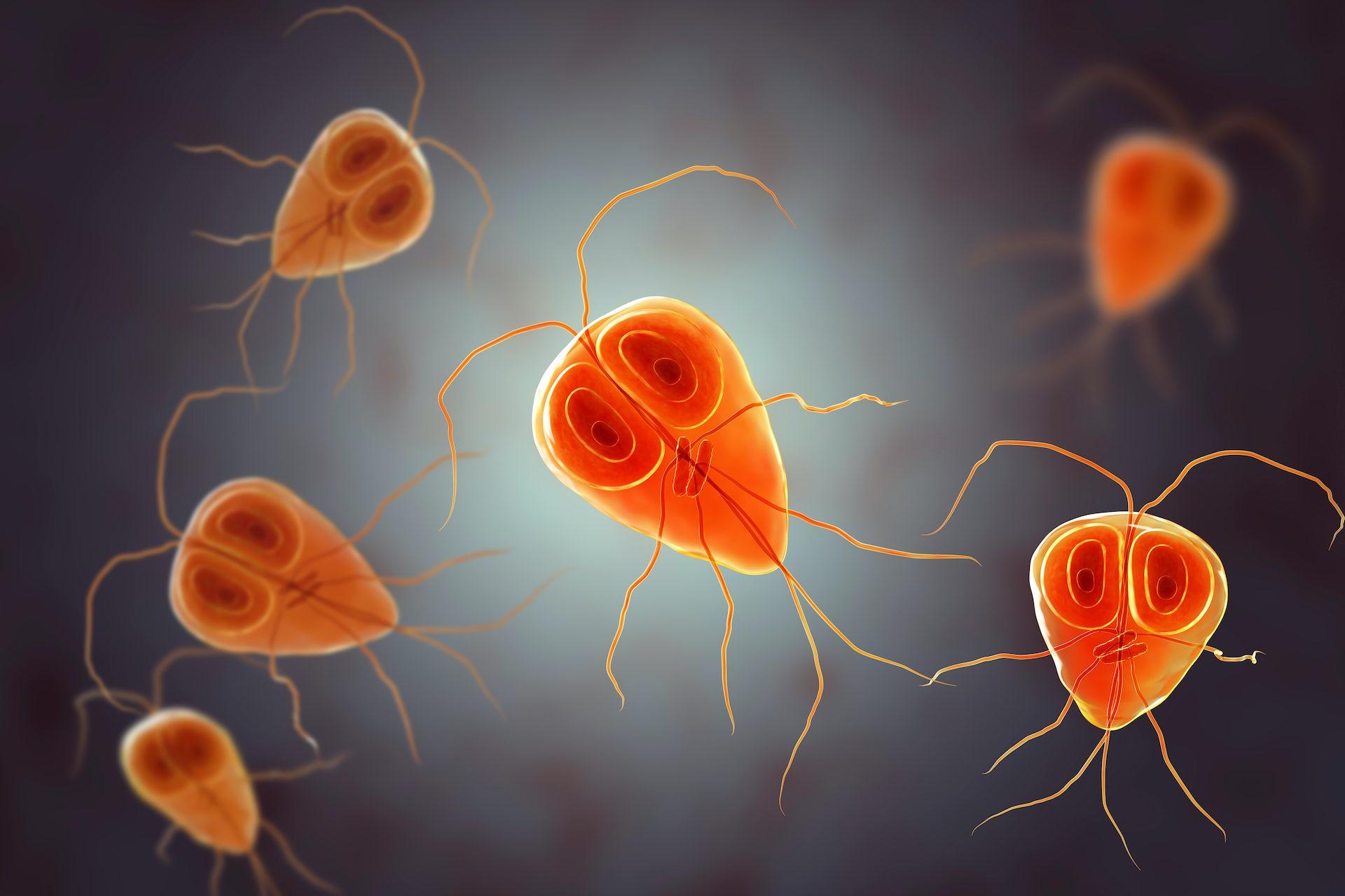 que es papiloma vacuna human papilloma virus terjadi karena