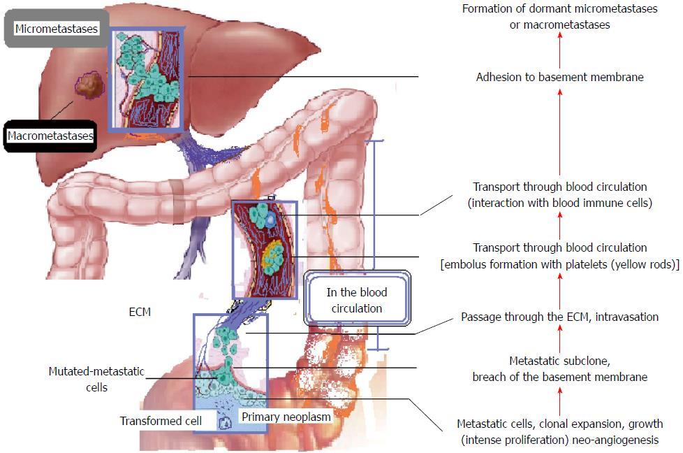 hpv krebs manner symptome