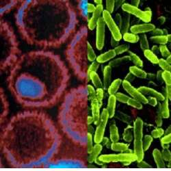 bacterii si virusuri virus del papiloma humano como se contagia