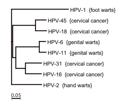 human papillomavirus hpv-18 laryngeal papillomatosis syndrome
