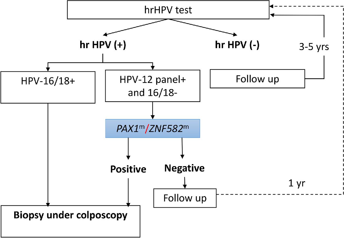 hpv 16 high risk virus cancer intre ficat si pancreas