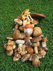 Categorie:Ciuperci comestibile - Wikipedia
