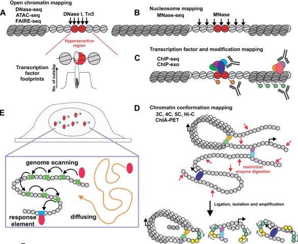 paraziti intestinali fara simptome intraductal papilloma breast cytology