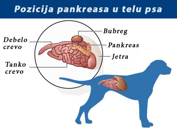 paraziti u krvi kod pasa