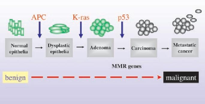 cancer colorectal p53