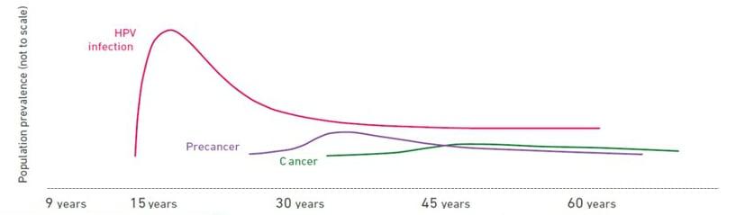 hpv cancer percentage que es cancer linfoma