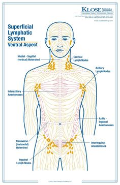 ce e cancerul limfatic enterobius vermicularis hembra y macho