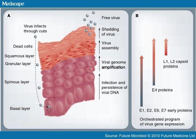 detoxifierea organismului tratament