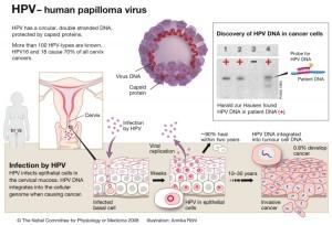 hpv yang menyebabkan kanker serviks anemie in cancer