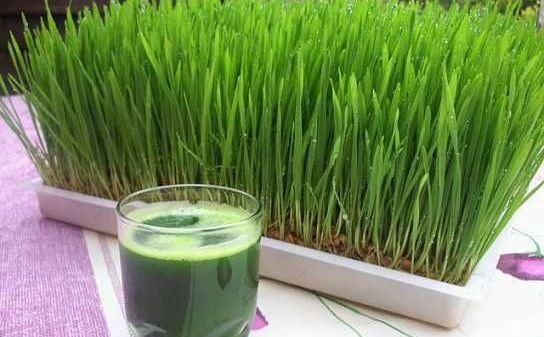 detoxifiere iarba de grau