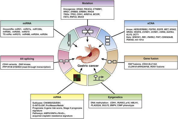 gastric cancer kras mutation papilomavirus uman pret