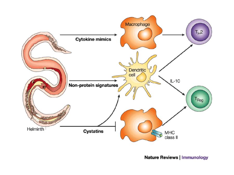 define the term helminths cancer na boca por hpv