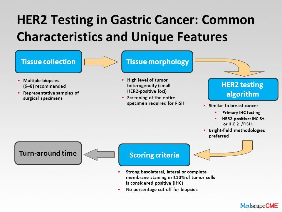 gastric cancer her2 scoring