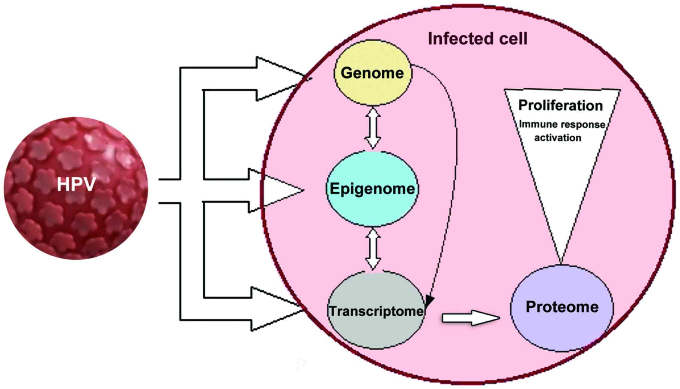 papillomavirus ce este