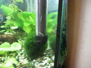 paraziti v akvariu na skle