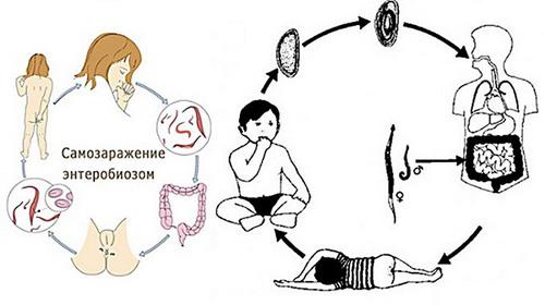 enterobiasis symptoms papillomavirus and warts