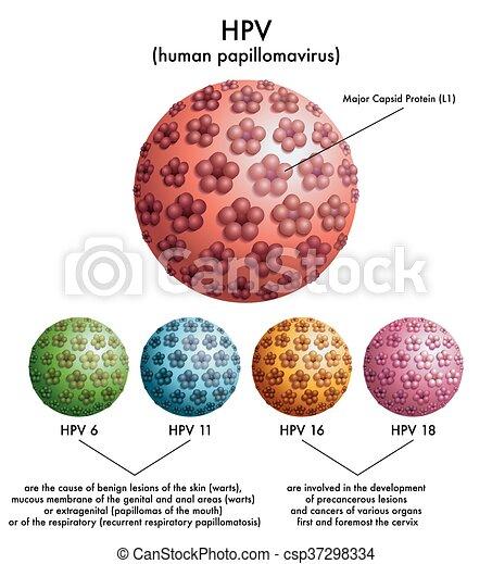 hpv 16 papillomavirus