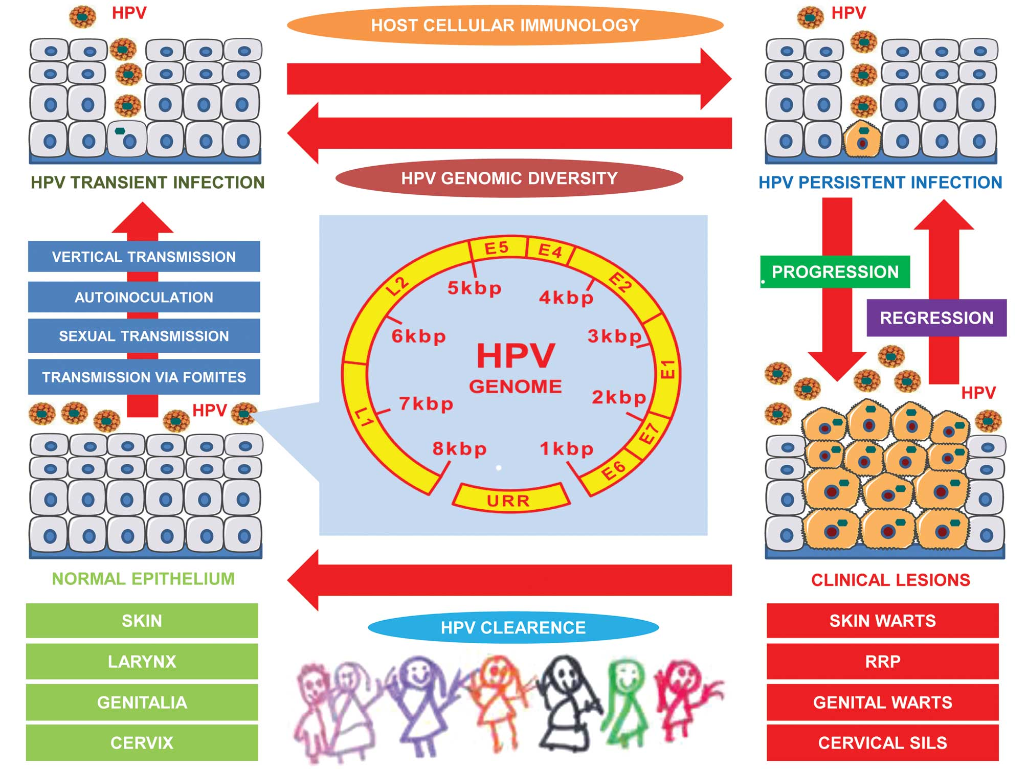 lesion papillomavirus oncogene