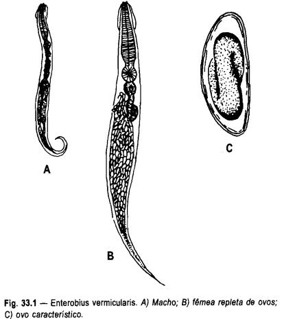 Vermoxum contra Giardia