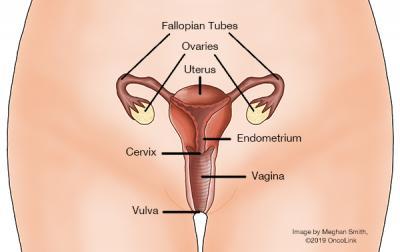enterobius vermicularis reino filo classe cancer cervical stages