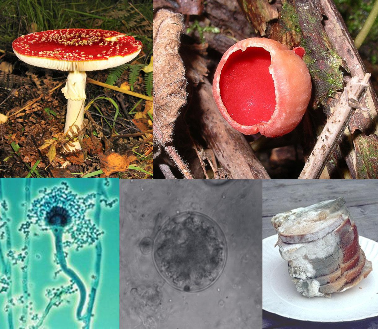 ciuperci fungi papiloma humano que es sintomas