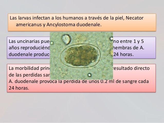 Helminti Enterobius