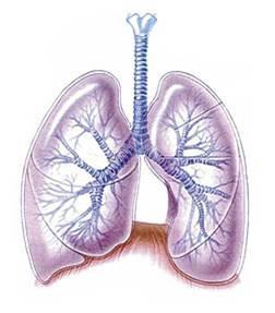 cancer pulmonar genetic virus papilloma vaccin