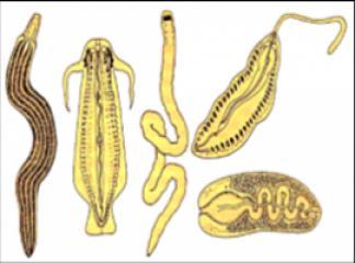 giardia lamblia parazit nedir cancerul mamar metastatic