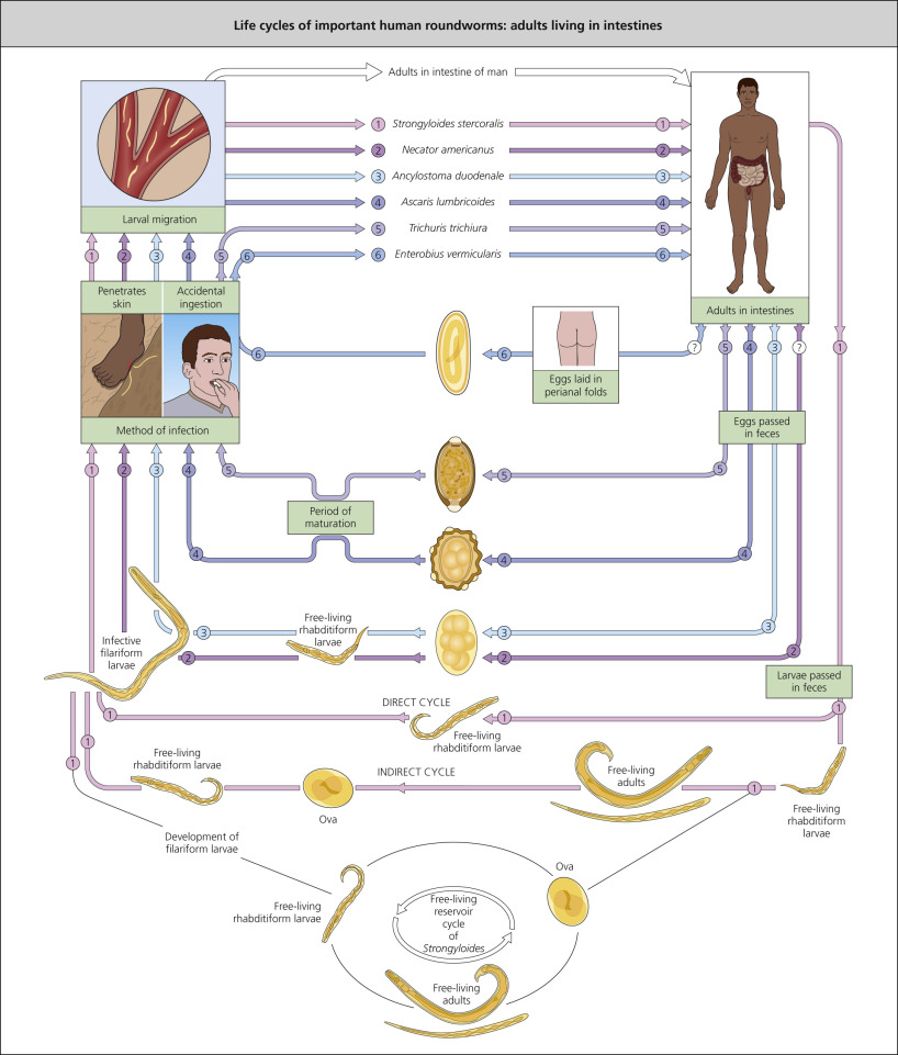 human papillomavirus-related oropharyngeal cancer