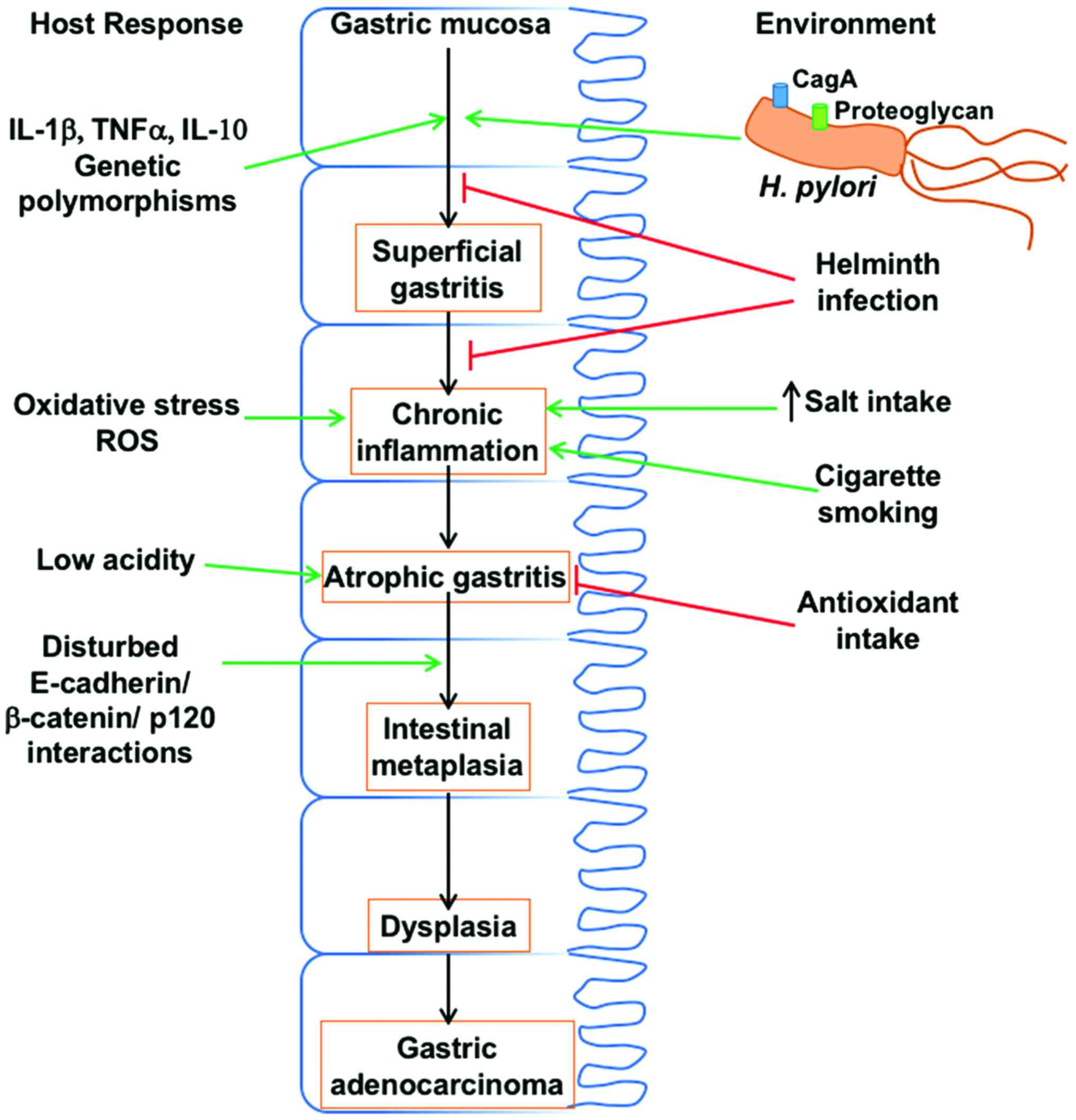 respiratory papillomatosis with lung