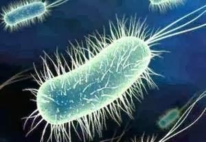 bacterii unicelulare